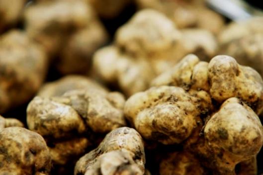 white-truffles