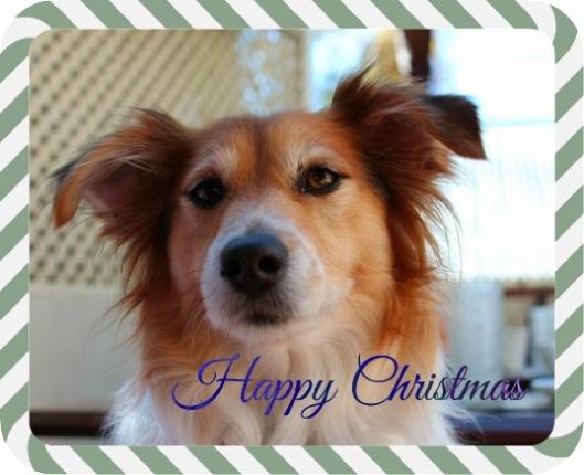 Christmas Buddy