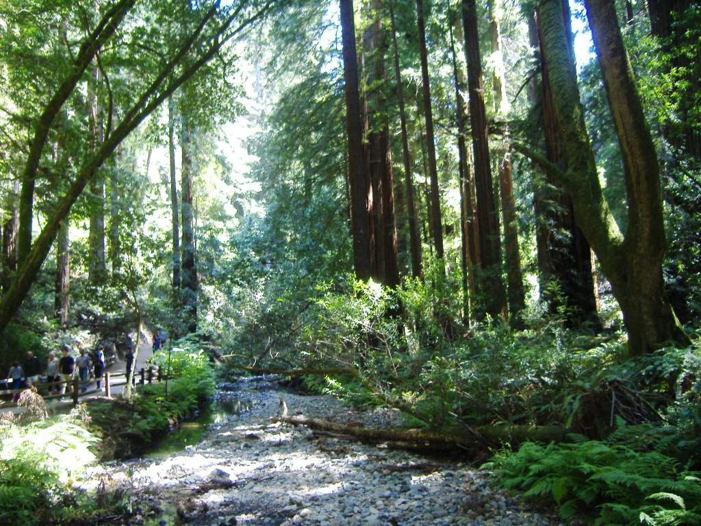Beautiful Park Muir Woods Travelling With Lyn