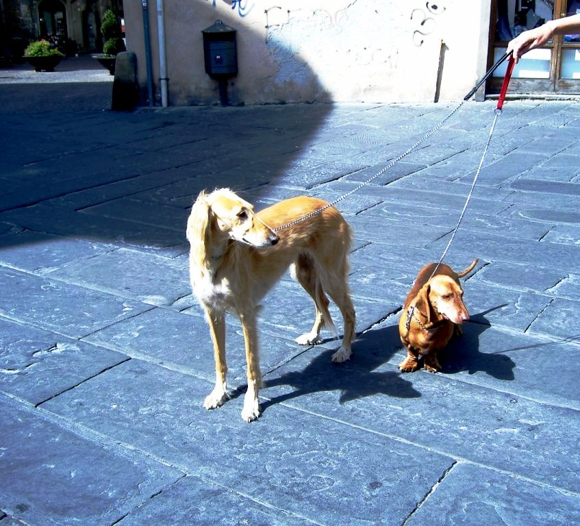 Dog Watching in Italy (2/6)