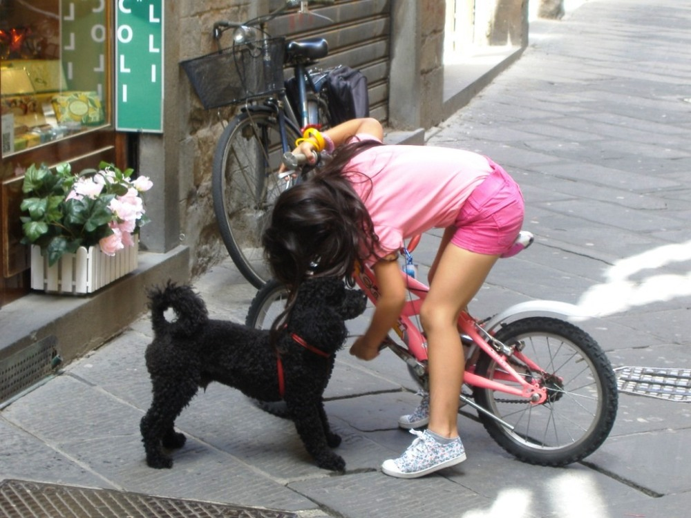 Dog Watching in Italy (6/6)