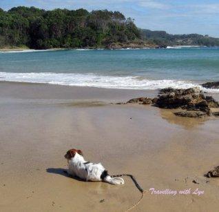 buddy on beach
