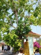 Vĩnh Tràng Chùa
