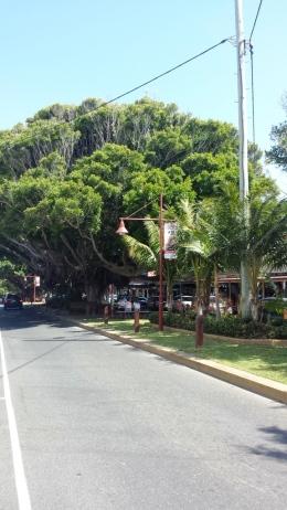 Main street Sawtell
